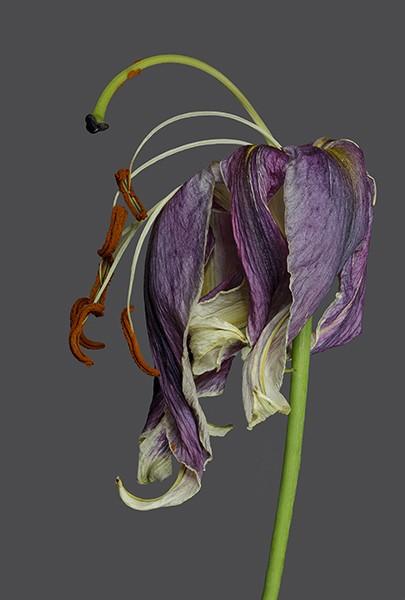 Rebekah Taylor, Lily 2 The Last Dance, 2015, £300, photograph, limited edition, REN Fine Art