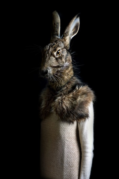 Miguel Vallinas Prieto, Rabbit - Portrait Number Twenty Nine, £625, My Life In Art.